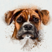 Guess The Dog Breed- Quiz 8.12.1z