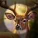 Wild Deer Hunting Animal Shooting Game 2020 1.3
