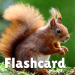 Animal flashcard & sounds for kids & toddlers 2020.24