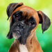 Boxer Dog Simulator 1.0.4